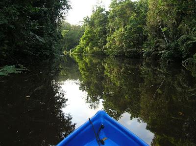 Vegetación reflejada en Parque Tortuguero,Costa Rica, vuelta al mundo, round the world, La vuelta al mundo de Asun y Ricardo, mundoporlibre.com