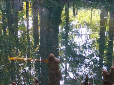 大阪府交野市・大阪市立大学 理学部付属 植物園 池の鯉