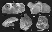 http://sciencythoughts.blogspot.co.uk/2014/12/sharks-teeth-and-scales-from-devonian.html