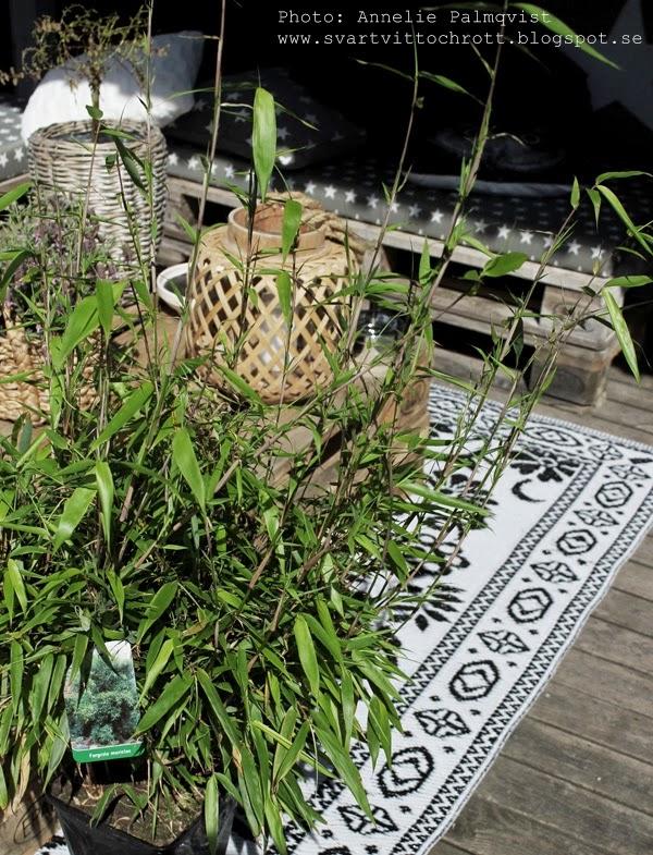 bambu, bambuträd, bambuträden, bambuträdet, träd, växter, till altanen, matta altan, altanmatta, altanmattor, altan, altaner, korgar till träd, lykta, gekås, blommor,