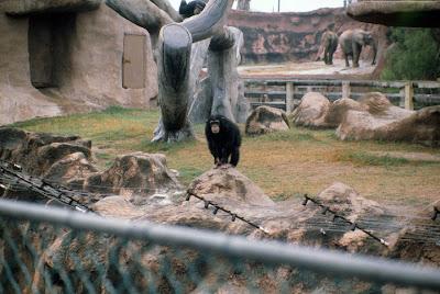Gladys Porter Zoo Hour DVD Addict