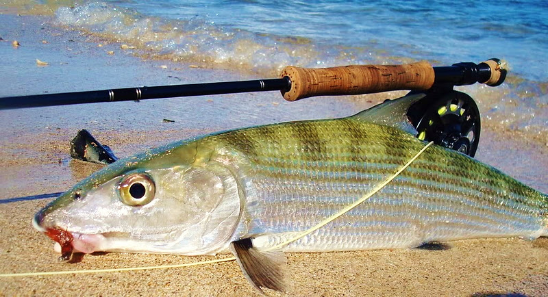 The pine island angler vieques bonefish for Fly fishing puerto rico