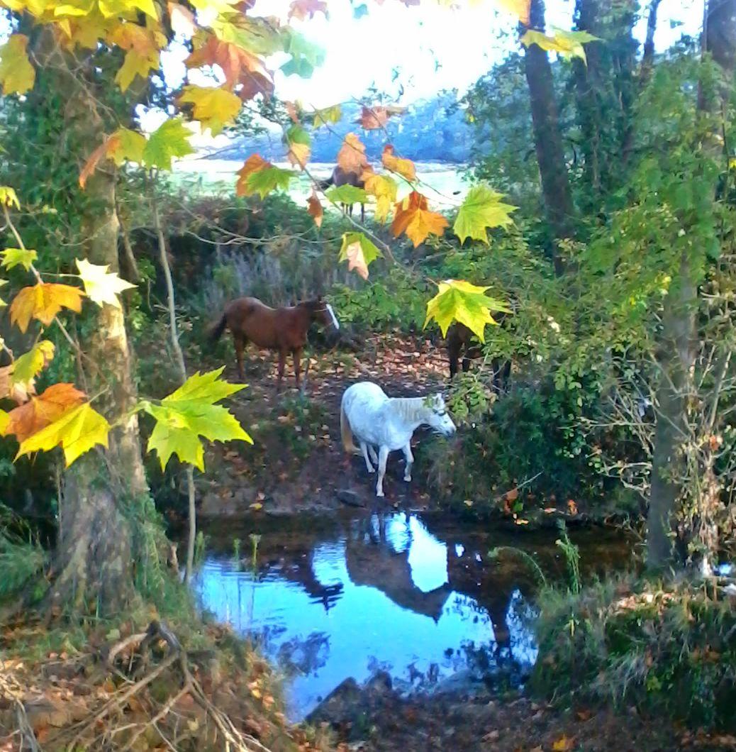 caballos Asturias naturaleza sendero