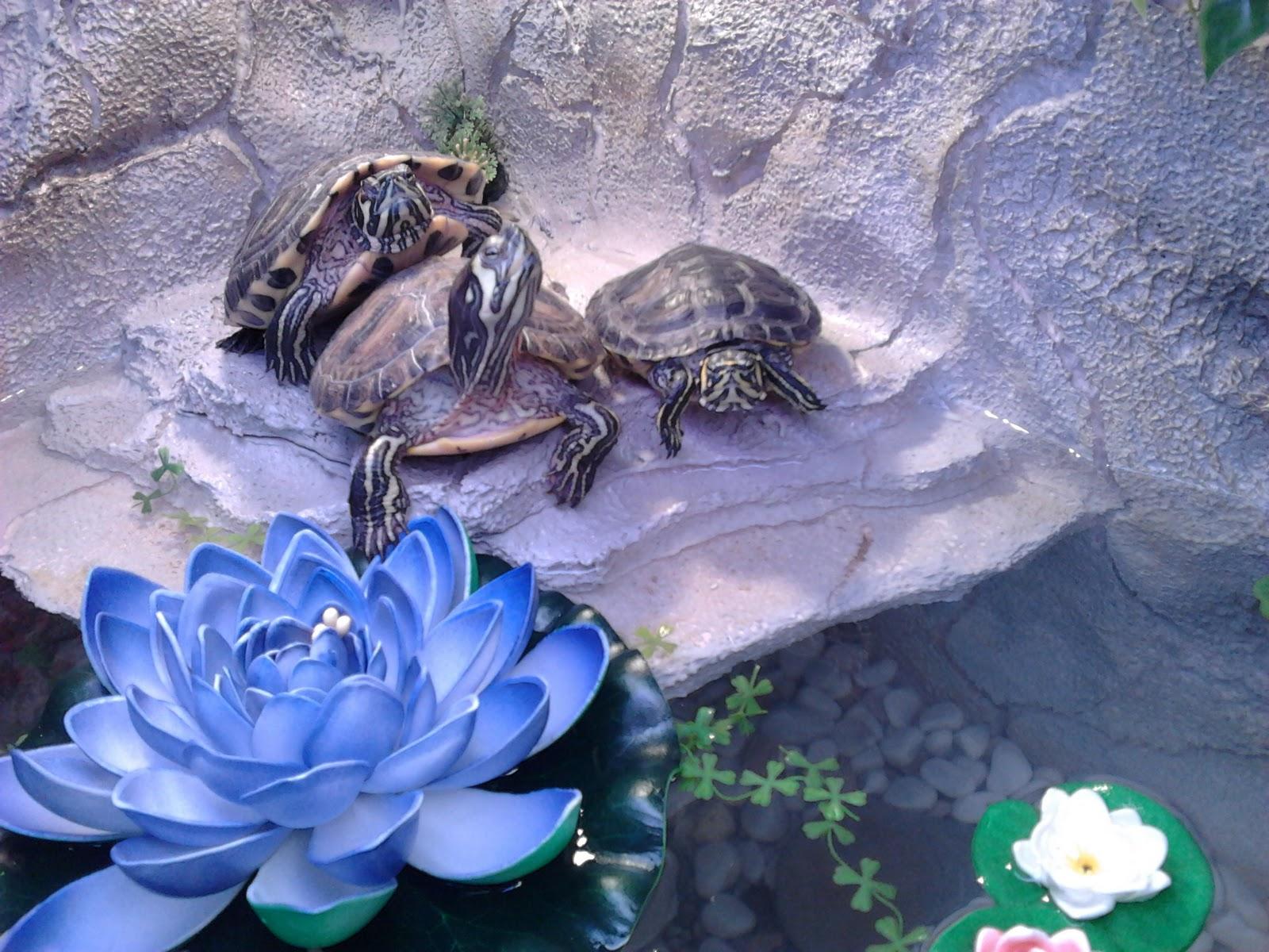Lillove un acquario fai da te for Sassi per tartarughe