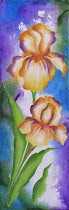 """Sun Drenched Irises"""