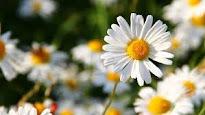 Primavera-Verano.