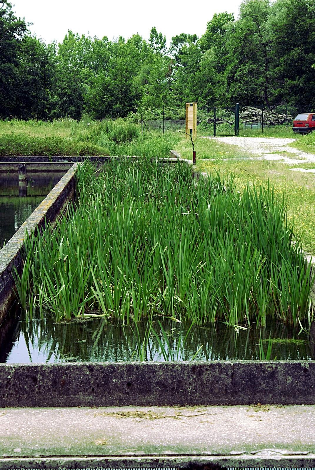 I segreti del vecchio bosco le sorgenti del bacchiglione for Vasche per allevamento trote