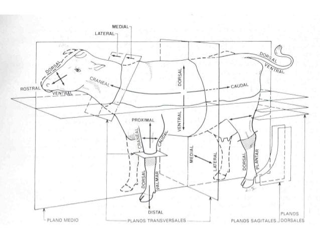 Atlas Medicina Veterinaria: Introducción a la anatomía.