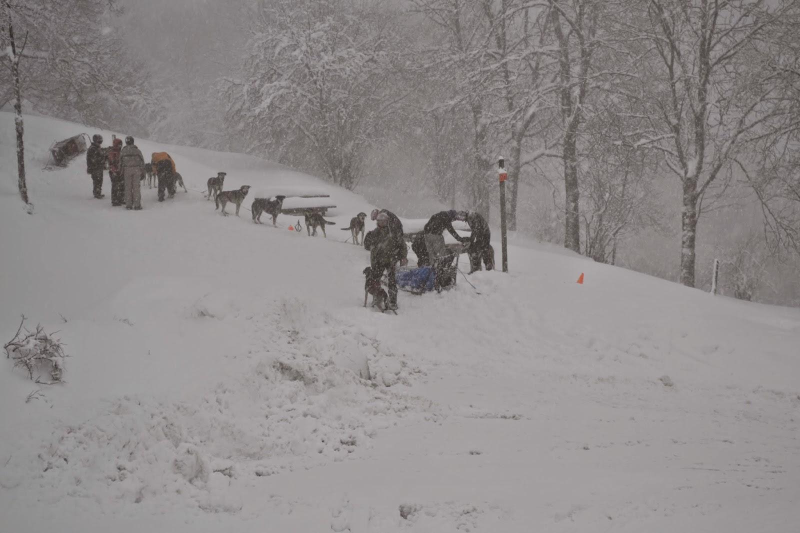 Photos de chiens de traineaux dans la neige - Photos de neige gratuites ...