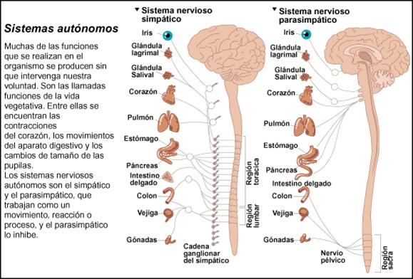 La psoriasis cerca de las fotos adultas los síntomas y el tratamiento a los adultos
