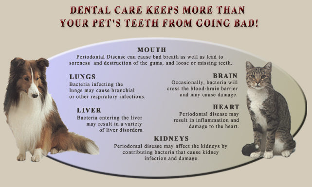 Slogans For Pet Dental Month | just b.CAUSE