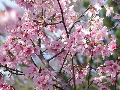 陽明山花季2012
