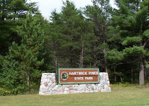 Inspiration from Hartwick Pines in Grayling, Michigan