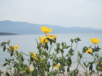 Yellow poppies and seascape, Lefkada, Greece