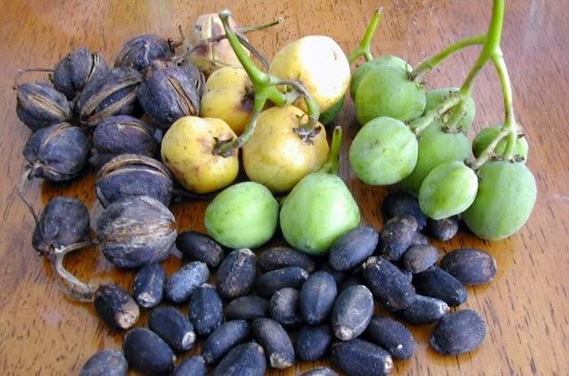 Manfaat Minyak Jarak Sebagai Pembersih Wajah Alami