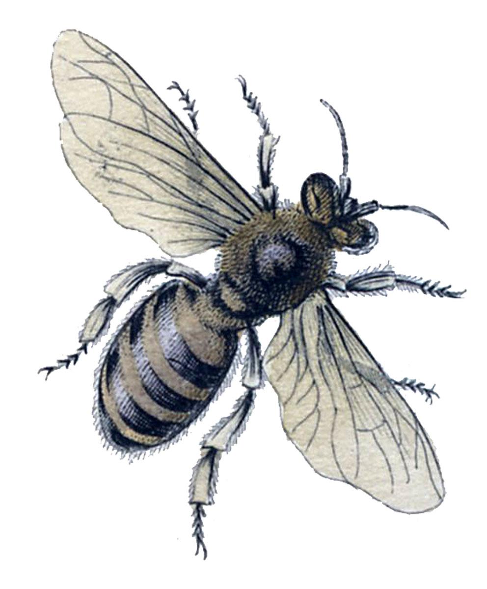 thinking of bees barn talk