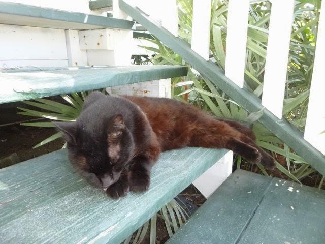 kitty at overseas railroad museum