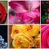 Hermosas flores y rosas animadas para compartir y decorar los muros en facebook