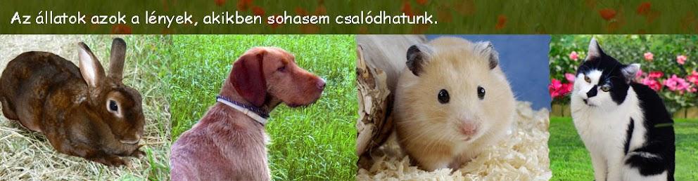 háziállatblog