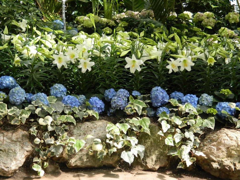 Allan Gardens Conservatory Easter Flower Show blue hydrangeas white lillies by garden muses: a Toronto gardening blog