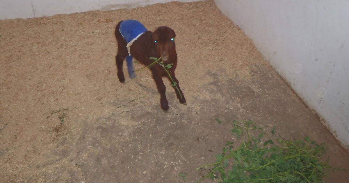 We dont just treat horses and donkeys!