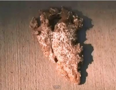 Mississippi Bigfoot Footprint