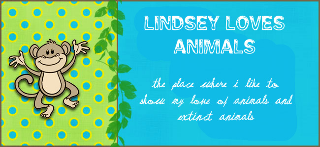 Lindsey Loves Animals