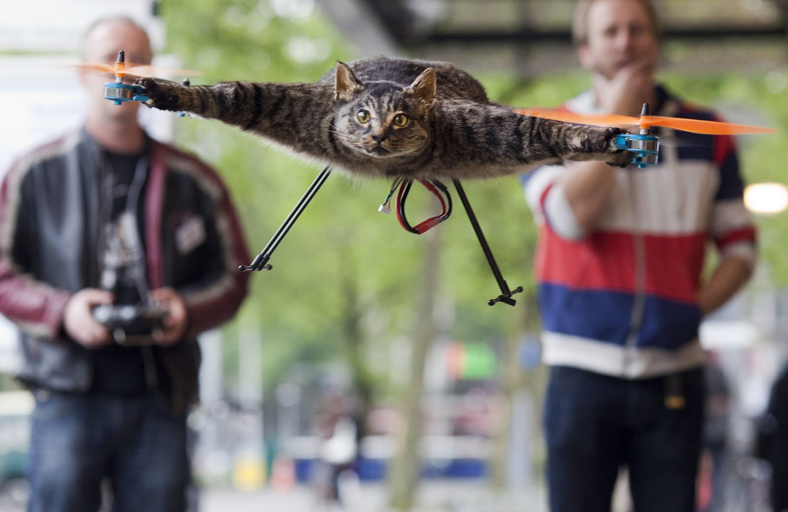 Орвиллкоптер - кот вертолет