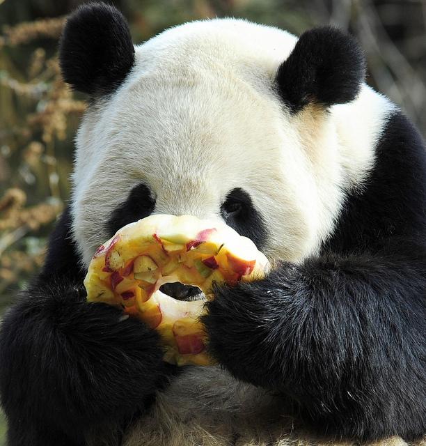 Panda Helpers