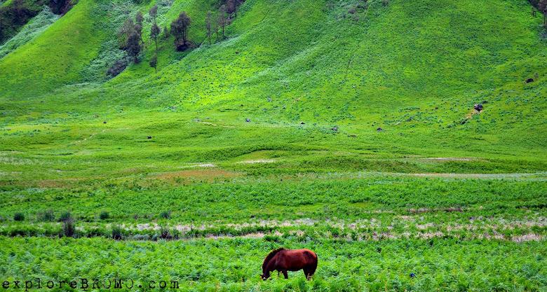 padang savana nan hijau dan kuda sedang merumput