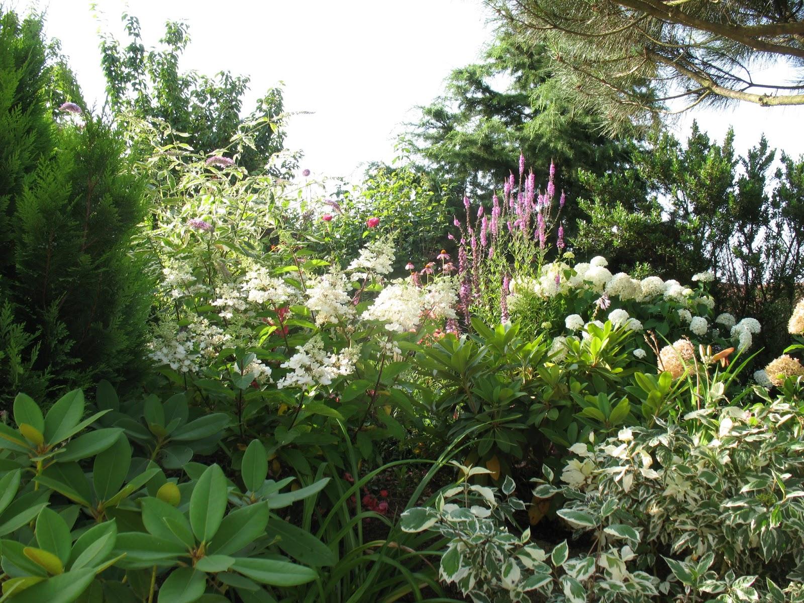 Roses du jardin ch neland cr ation d 39 un massif de plantes vivaces - Comment faire des boutures d hortensia ...