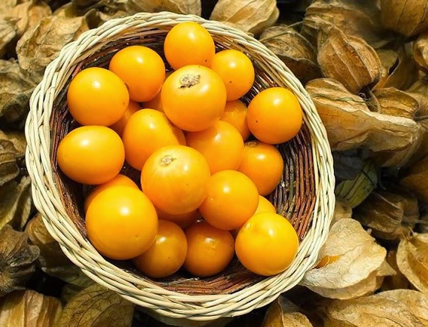 Superfruta, golden berry é rico em ferro e ideal para quem não come carne