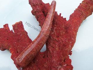 batu karang merah