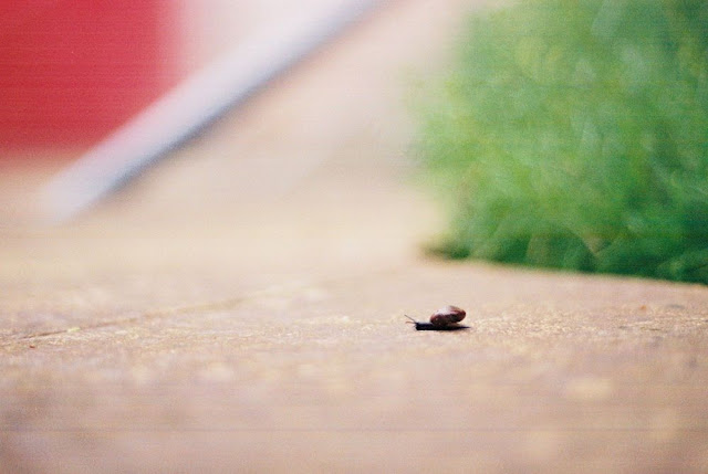 Lone snail traversing a paving slab. Very narrow depth of field.