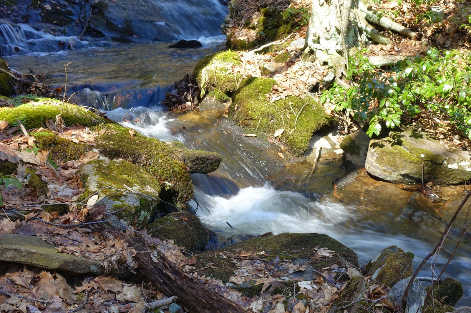Fishing small streams: Opening Day