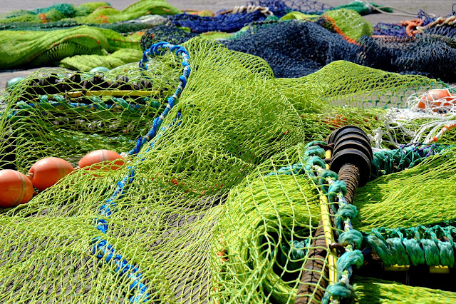 http://innovation-forum.co.uk/sustainable-seafood-sourcing.php