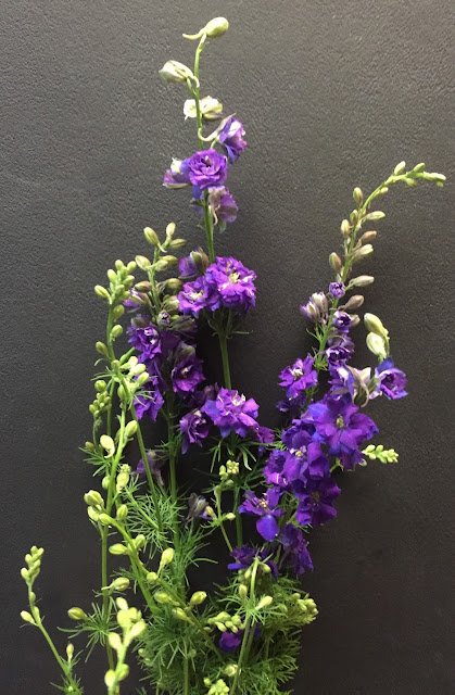 Purple Larkspur - Stein Your Florist Co.