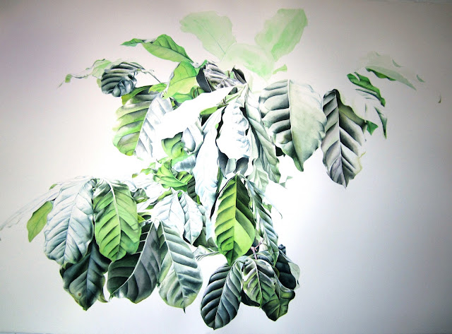 Coffea arabica - a work in progress