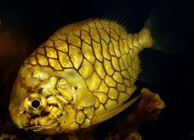 A beautiful sea fish