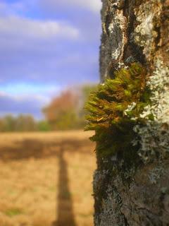 arbre charolais