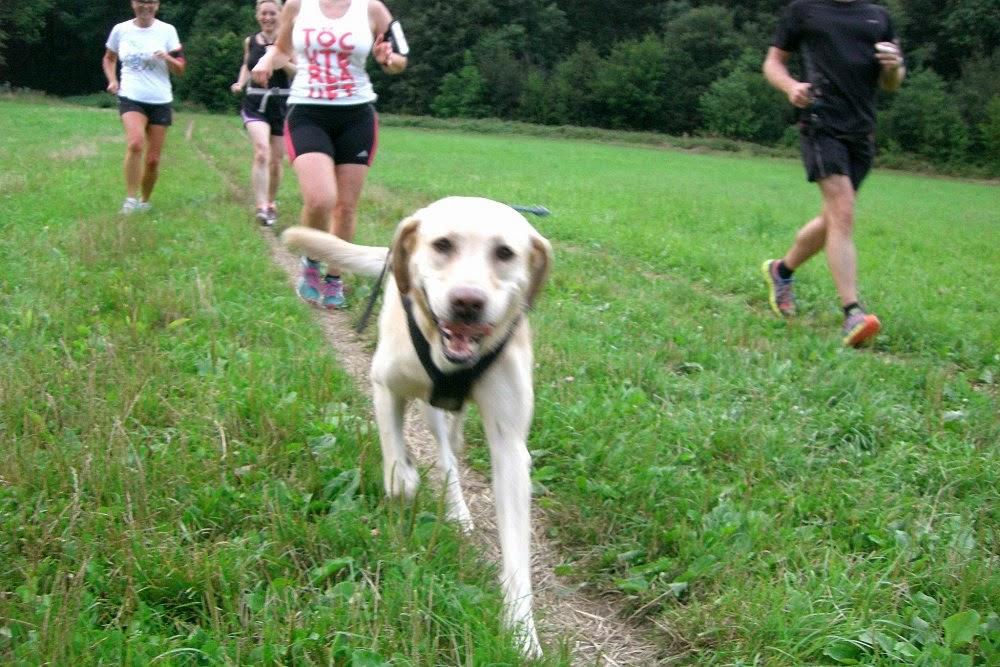 Runtasia infokanal wenn hunde das laufen schwer machen