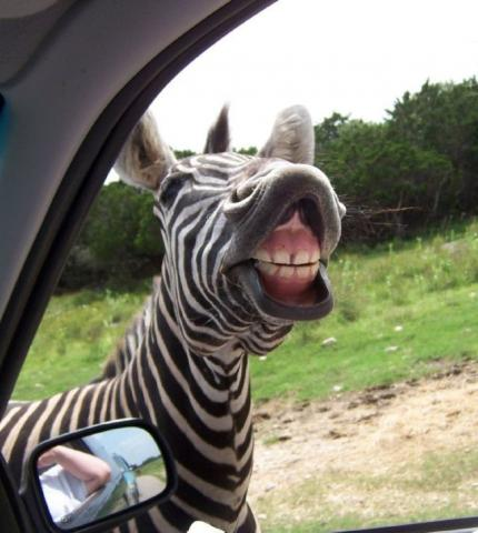 funny animal pictures, crazy looking animals, funny looking animals, animals making funny faces