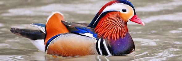 Pássaro Nadando Sozinho