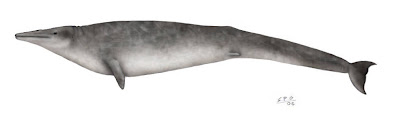 ballenas prehistoricas Zygorhiza