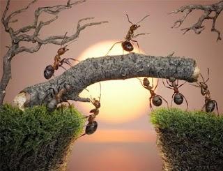 Kisah Semut Nabi Sulaiman Semut Pertama Masuk Syurga