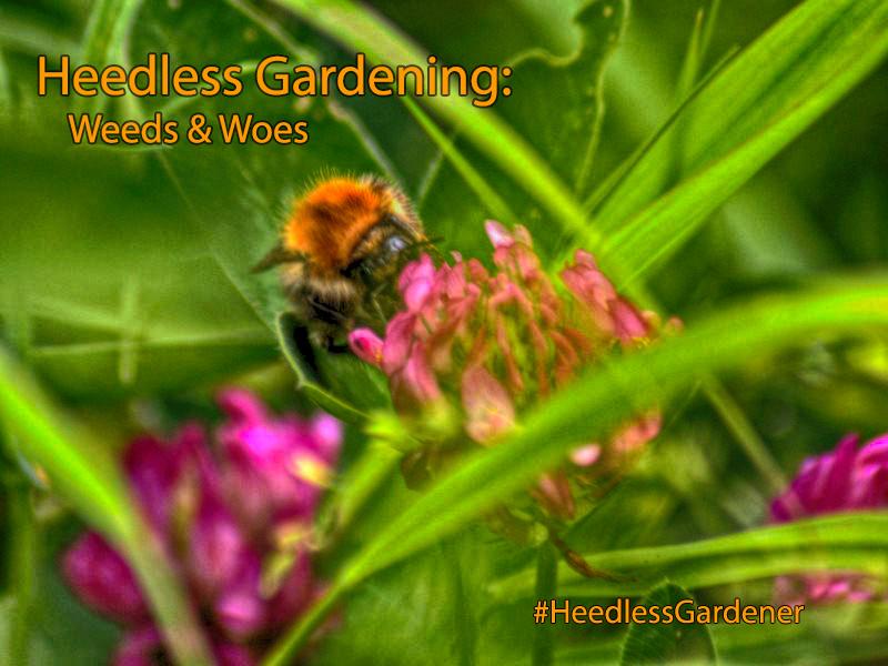 Heedless Gardening - Weeds & Woes