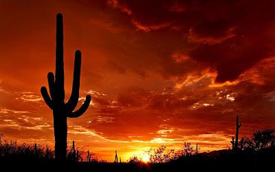 ¿Por qué las cactáceas sobreviven en el desierto?