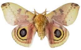 Gypsy Moth Antiques