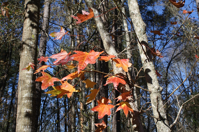 Wordless Wednesday - Winter Leaves