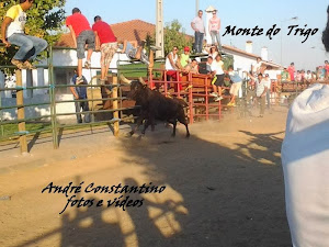 André Constantino Reportagens